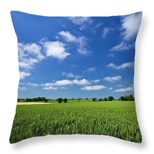 Environmental Conservation Throw Pillow featuring the photograph Fresh Air. Blue Skies Over Green Wheat by Alvinburrows