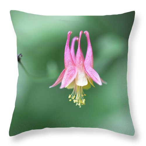Art Throw Pillow featuring the photograph From A Summer Walk In The Woods by Jakub Sisak