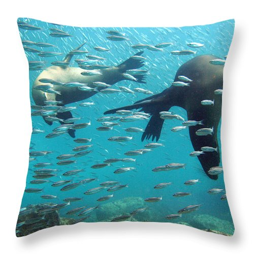 Underwater Throw Pillow featuring the photograph Galapagos Sea Lion by Bettina Lichtenberg