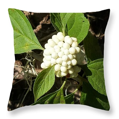 Throw Pillow featuring the photograph Galileo by Gewanda Parker