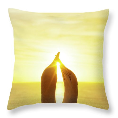 Care Throw Pillow featuring the photograph Gannets Greeting Each Other Between by Jason Hosking