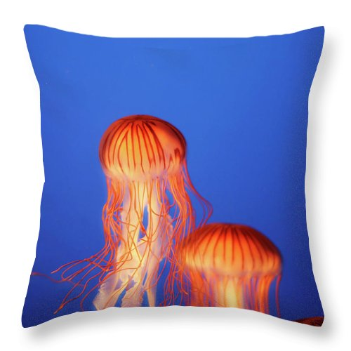 Underwater Throw Pillow featuring the photograph Glowing Jellyfish Under Water by Indy Randhawa