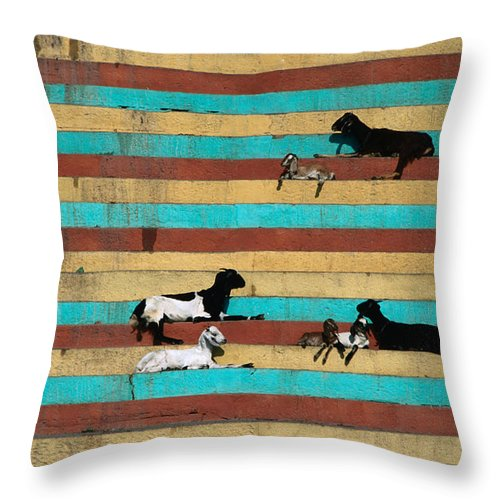 Steps Throw Pillow featuring the photograph Goats Resting On The Tulsi Ghats by Anders Blomqvist