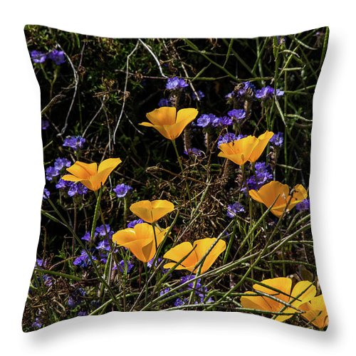 Arizona Throw Pillow featuring the photograph Gold Poppies In Scorpion Weed by Kathy McClure