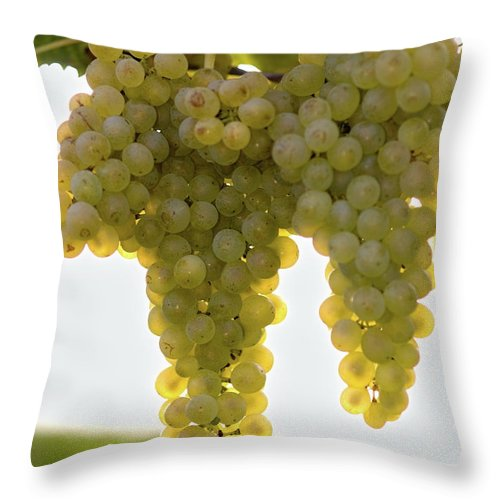 Sonoma County Throw Pillow featuring the photograph Golden Wine by Farbenrausch
