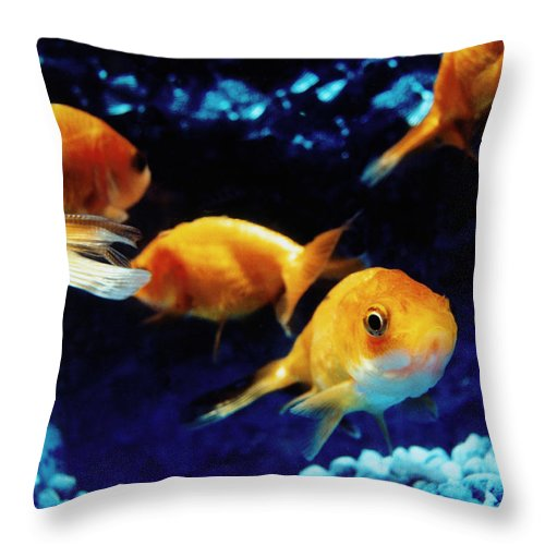 Pets Throw Pillow featuring the photograph Goldfish In Fish Tank by Silvia Otte