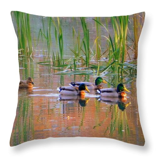 Got My Ducks In A Row Throw Pillow featuring the photograph Got My Ducks In A Row by Karen Cook