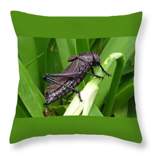Throw Pillow featuring the photograph Grasshopper by Stanley Vreedeveld