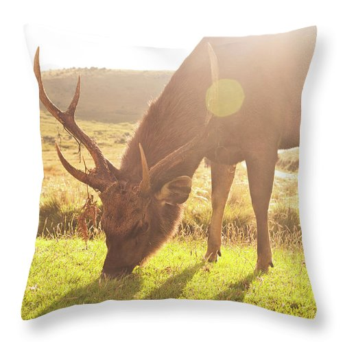 Horned Throw Pillow featuring the photograph Grazing Deer by Flash Parker