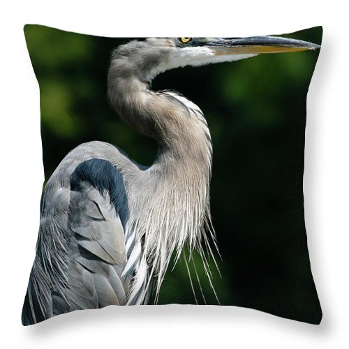 North Carolina Throw Pillow featuring the photograph Great Blue Heron by Bill Swindaman