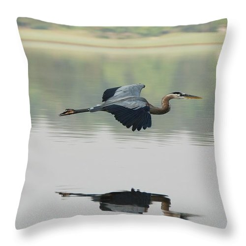 Animal Themes Throw Pillow featuring the photograph Great Blue Heron In Flight by Photo By Hannu & Hannele, Kingwood, Tx