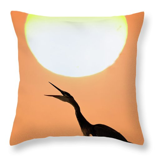 Animal Themes Throw Pillow featuring the photograph Great Blue Heron, Screeching, Sunset by Mark Newman