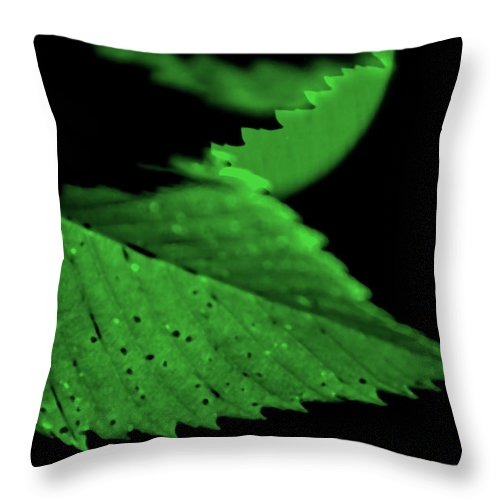 Leaf Throw Pillow featuring the photograph Green Leaf in Sun by Lonnie Paulson