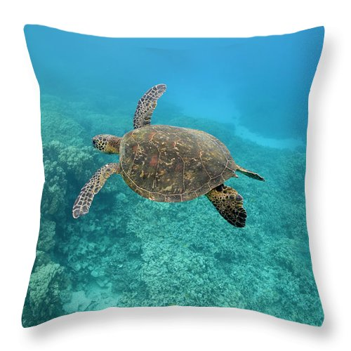 Underwater Throw Pillow featuring the photograph Green Sea Turtle, Big Island, Hawaii by Paul Souders