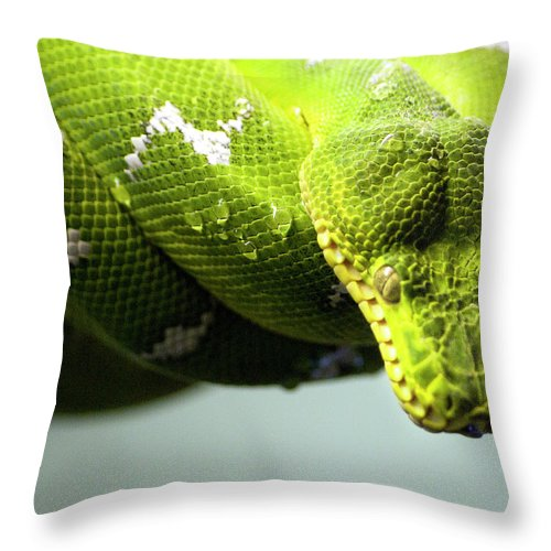 Toronto Throw Pillow featuring the photograph Green Snake Curled And Resting by Gail Shotlander