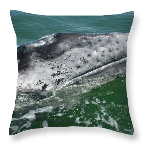 Latin America Throw Pillow featuring the photograph Grey Whale Head by Serengeti130