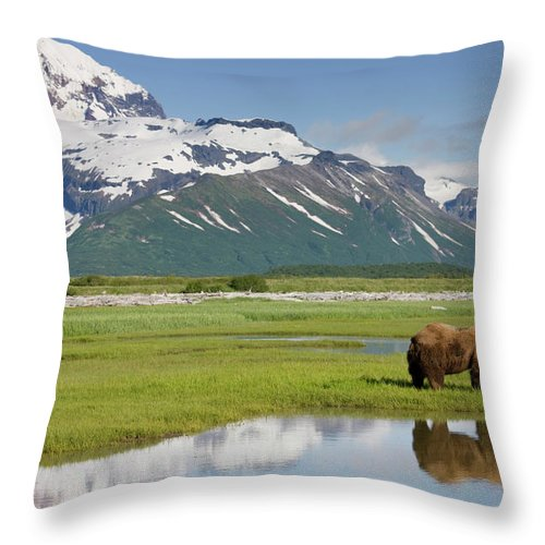 Brown Bear Throw Pillow featuring the photograph Grizzly Bear, Katmai National Park by Paul Souders