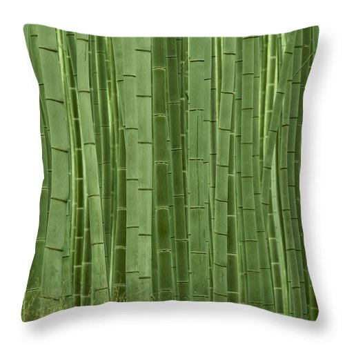 Bamboo Throw Pillow featuring the photograph Grove Of Bamboo Trees Phyllostachys by Akira Kaede