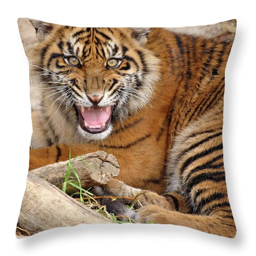 Snarling Throw Pillow featuring the photograph Growling Tiger by S. Greg Panosian