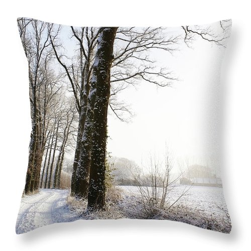 Tranquility Throw Pillow featuring the photograph Half Black, Half White by Bob Van Den Berg Photography