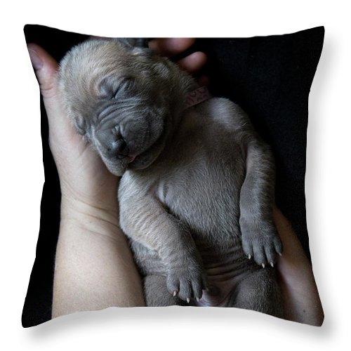 People Throw Pillow featuring the photograph Hands Holding A Sleeping Puppy by Ben Robson