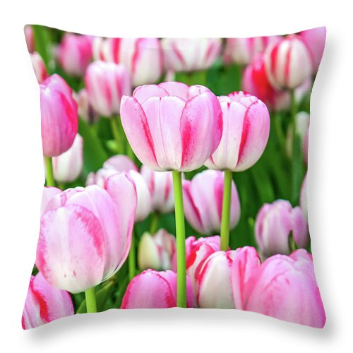 Flowers Throw Pillow featuring the photograph Happy Again by Az Jackson