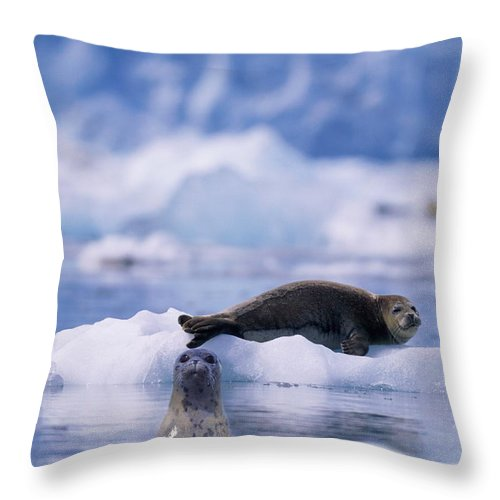 Animal Themes Throw Pillow featuring the photograph Harbor Seal Phoca Vitulina In Glacial by Paul Souders