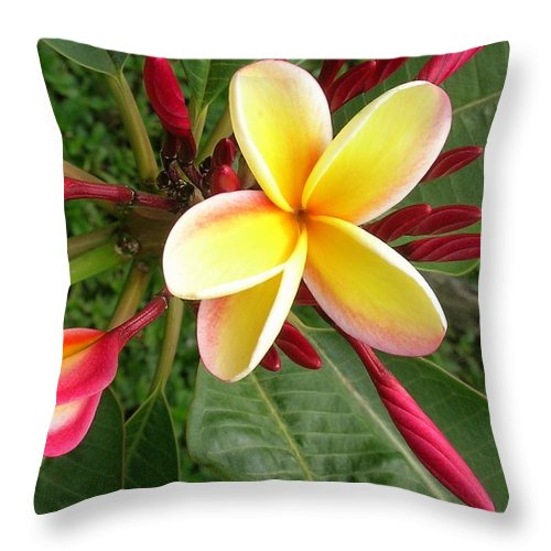 Plumeria Throw Pillow featuring the photograph Hawaii Plumeria by James Temple