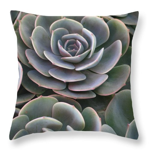 Scenics Throw Pillow featuring the photograph Hens And Chicks Plant Full Frame by Sassy1902
