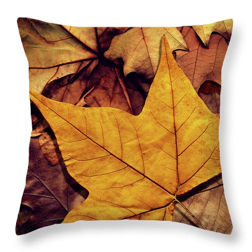 Orange Color Throw Pillow featuring the photograph High Resolution Dry Maple Leaf On by Miroslav Boskov