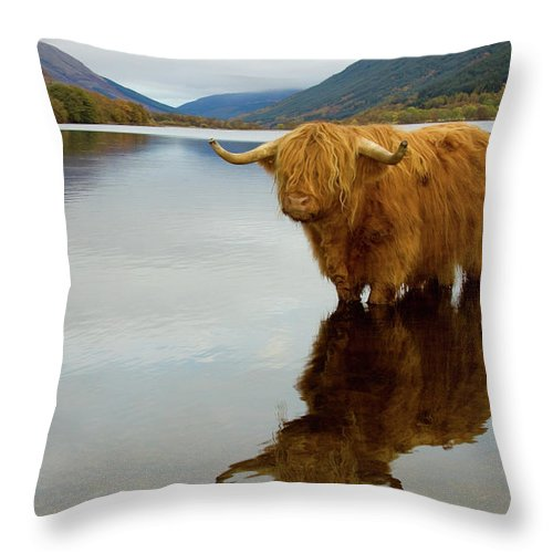 Horned Throw Pillow featuring the photograph Highland Cow by Empato