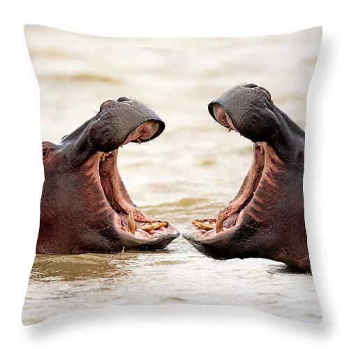 Isimangaliso Wetland Park Throw Pillow featuring the photograph Hippopotamus by Tier Und Naturfotografie J Und C Sohns