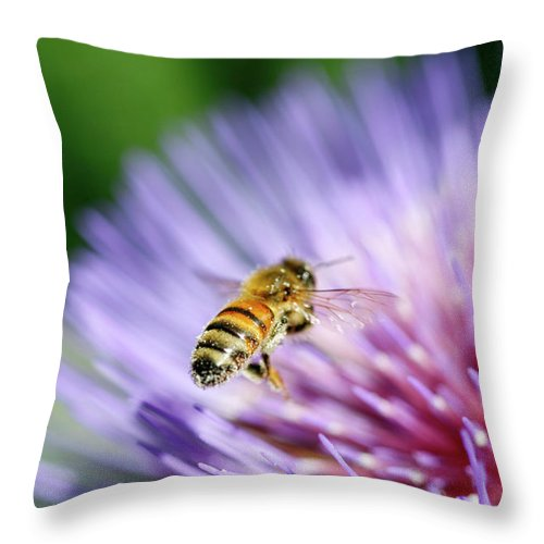 Scenics Throw Pillow featuring the photograph Honey Bee by Filo