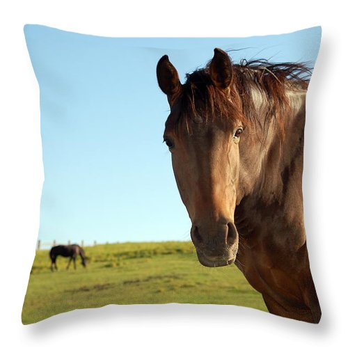 Horse Throw Pillow featuring the photograph Horse by Esemelwe
