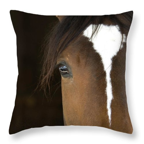 Horse Throw Pillow featuring the photograph Horse Head by Rterry126