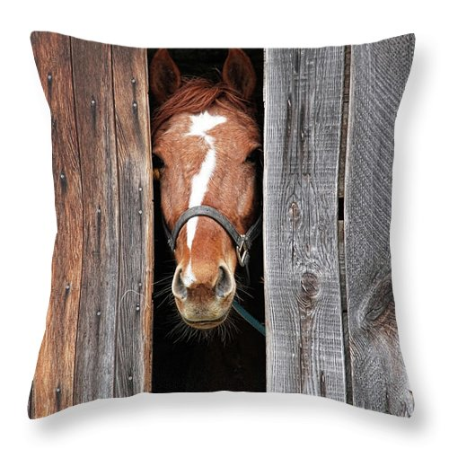 Horse Throw Pillow featuring the photograph Horse Peeking Out Of The Barn Door by 2ndlookgraphics