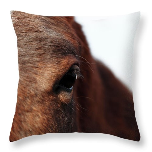 Horse Throw Pillow featuring the photograph Horse Portrait by R-j-seymour
