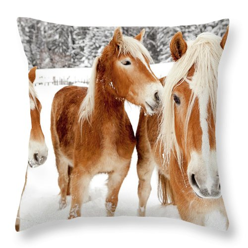 Horse Throw Pillow featuring the photograph Horses In White Winter Landscape by Angiephotos