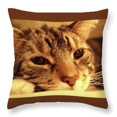 Throw Pillow featuring the photograph Huckle by Kate Servais
