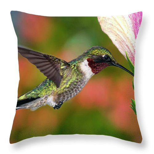 Animal Themes Throw Pillow featuring the photograph Hummingbird Feeding On Hibiscus by Dansphotoart On Flickr