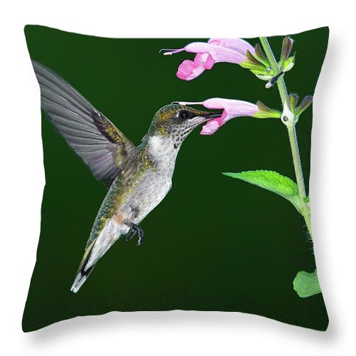 Animal Themes Throw Pillow featuring the photograph Hummingbird Feeding On Pink Salvia by Dansphotoart On Flickr