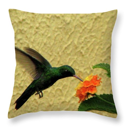 Animal Themes Throw Pillow featuring the photograph Hummingbird by Vi Lima