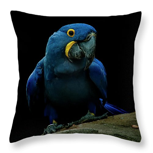 Macaw Throw Pillow featuring the photograph Hyacinth Macaw by Photo By Steve Wilson