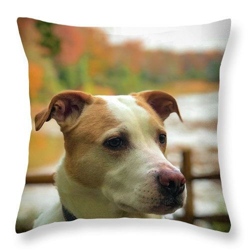 Dog Throw Pillow featuring the photograph I See Something by Lora J Wilson