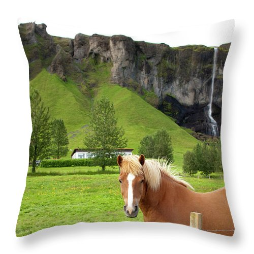 Scenics Throw Pillow featuring the photograph Icelandic Horse And Waterfall, Vik by Paul Souders