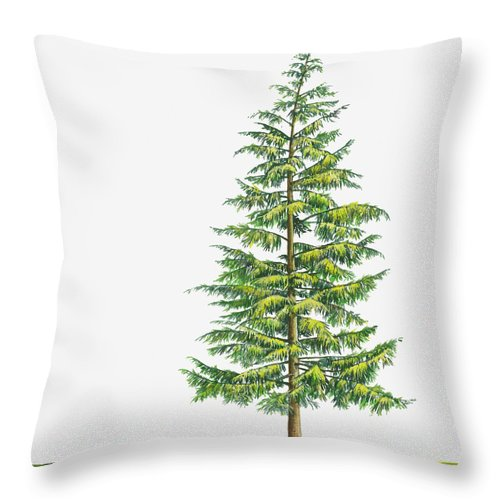 Watercolor Painting Throw Pillow featuring the digital art Illustration Of Large Evergreen Tsuga by Sue Oldfield