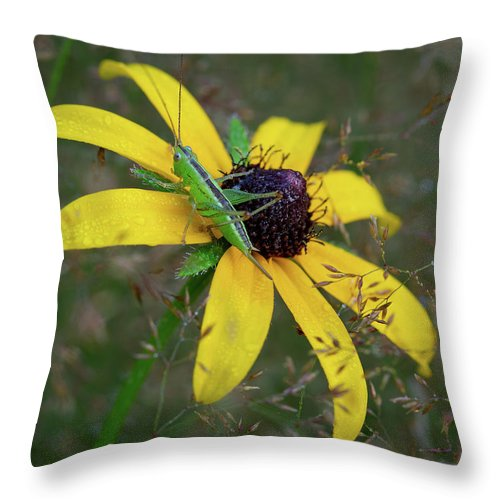 In The Meadow Throw Pillow featuring the photograph In The Meadow by Dale Kincaid