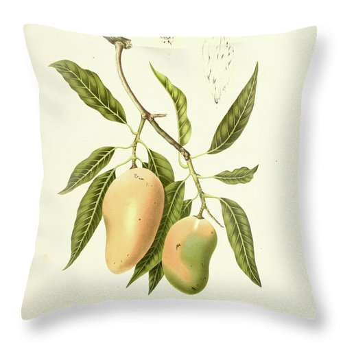 Artist Throw Pillow featuring the digital art Indian Mango   Antique Plant by Nicoolay