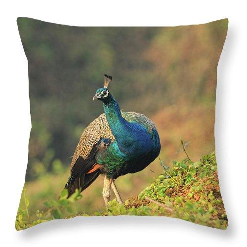 Dawn Throw Pillow featuring the photograph Indian Peafowl by Nishant Shah