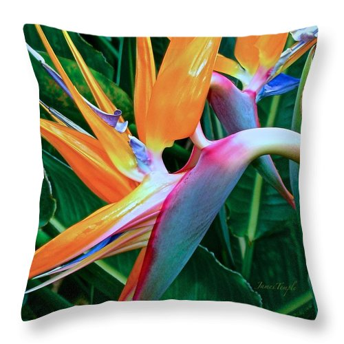 Bird Of Paradise Throw Pillow featuring the photograph Intertwine by James Temple